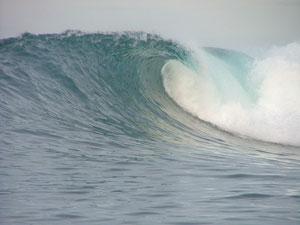 indo2005-065